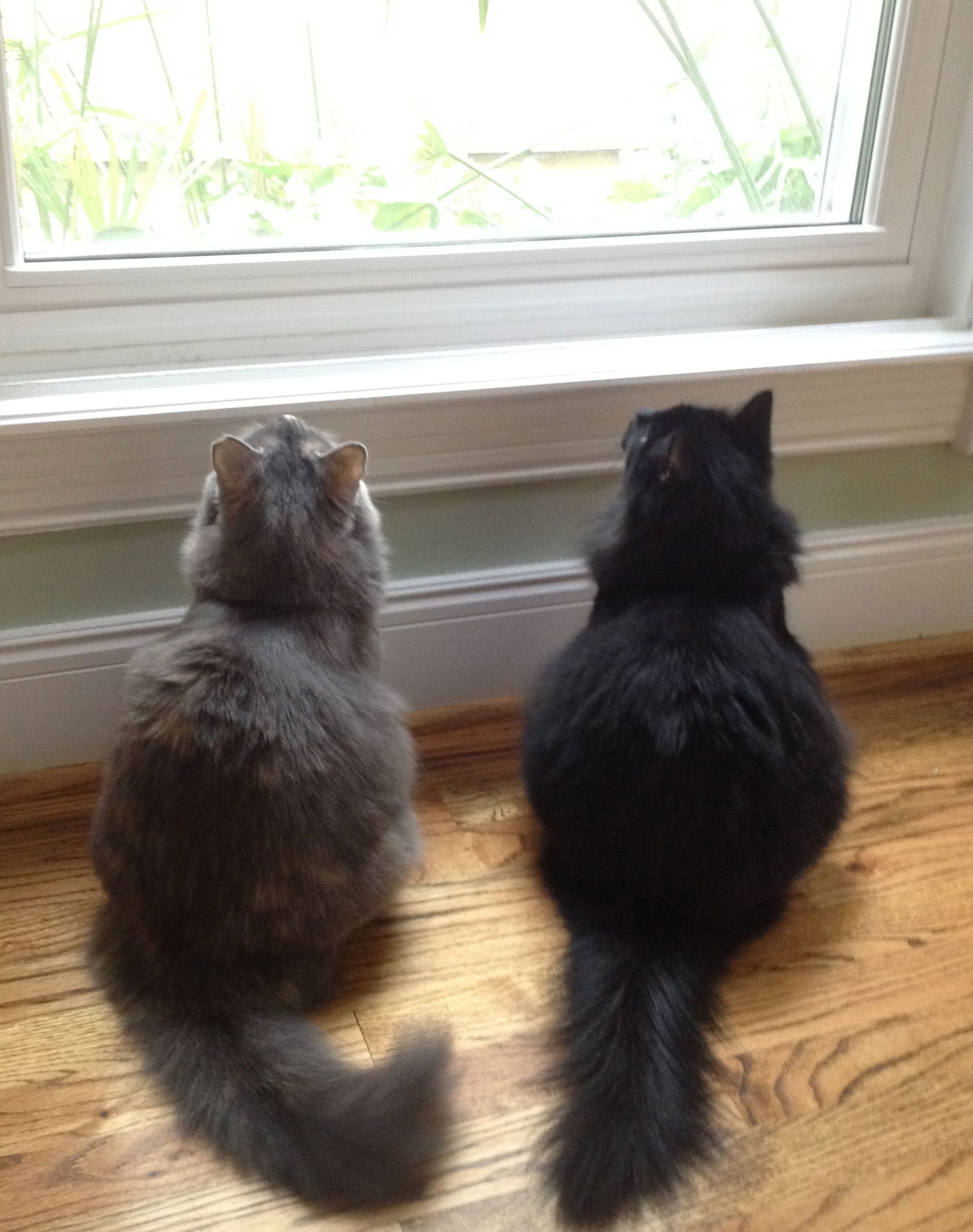 The-Kitty-Girls2